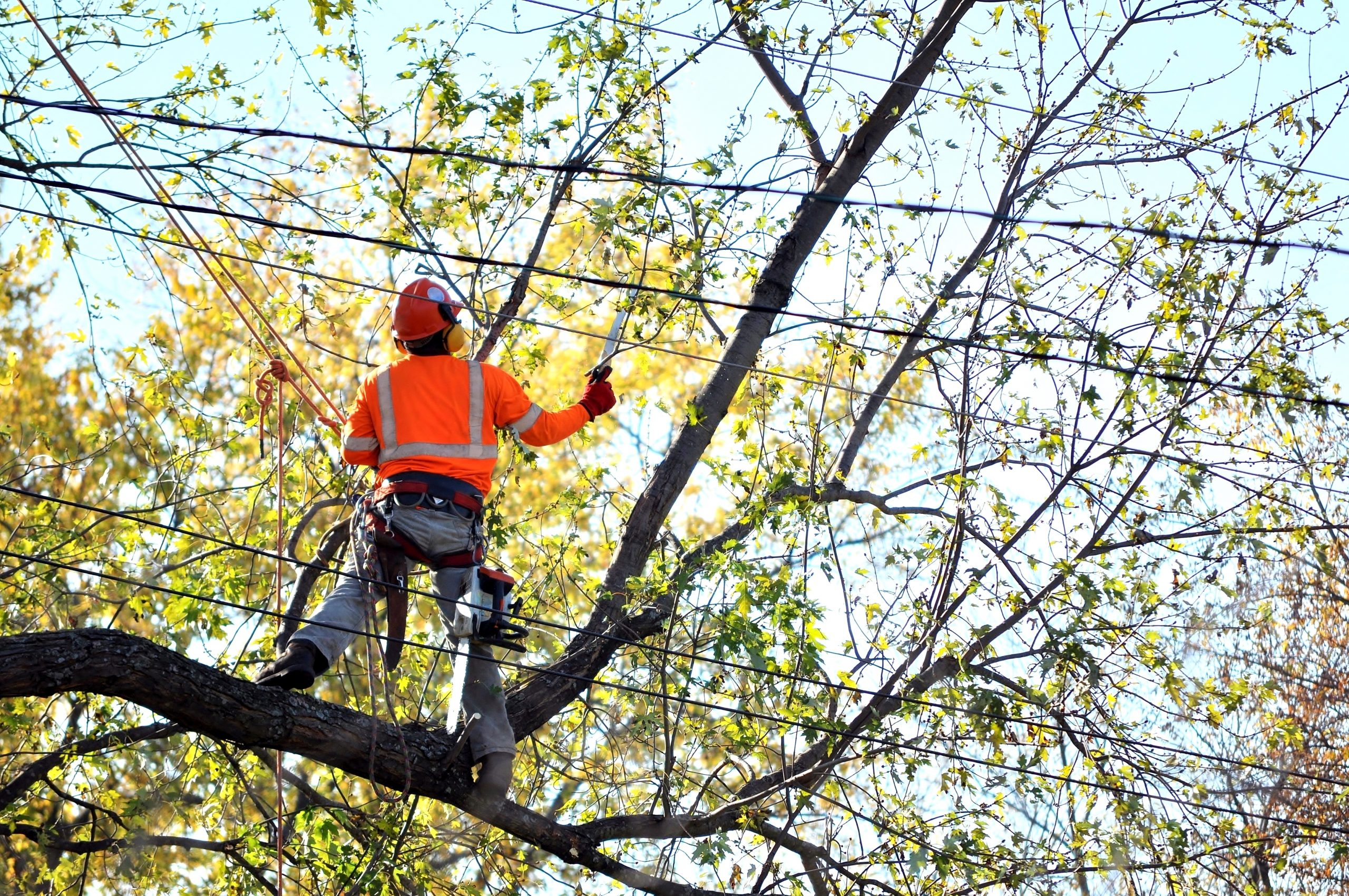 Man removing tree branches from around power lines