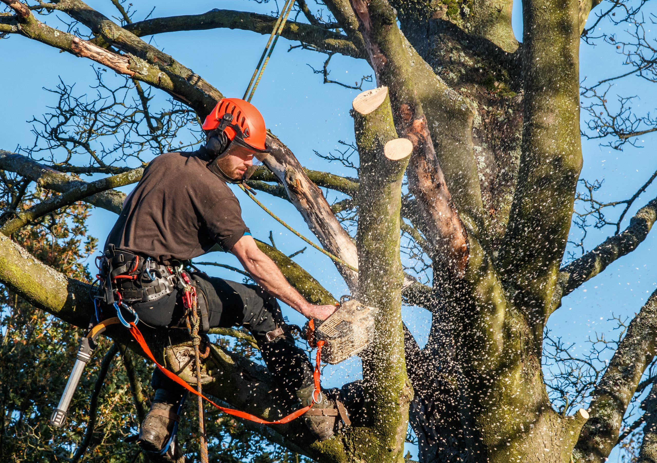 Man cutting branches off a tree