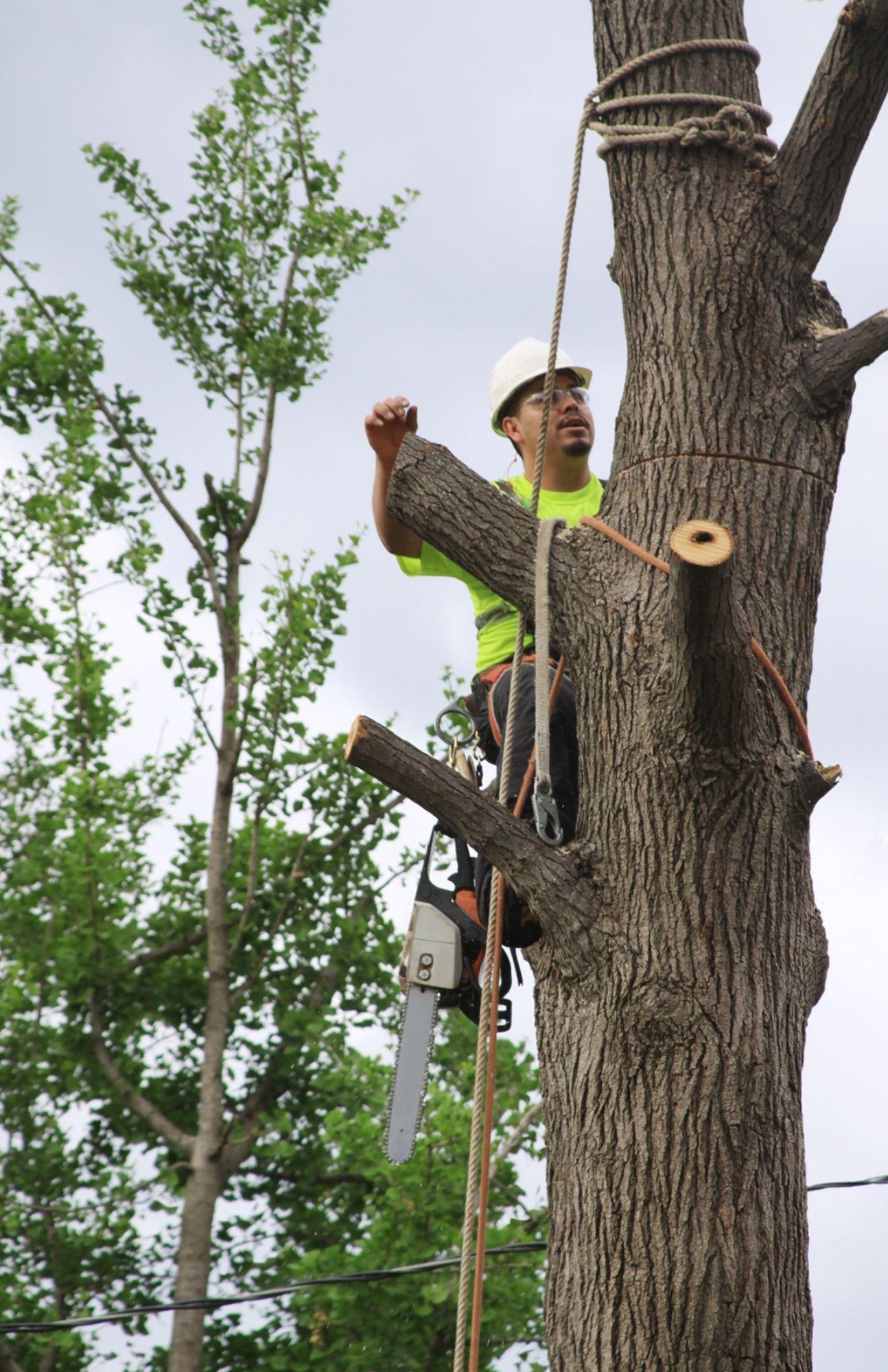 tree climbing job that happened in halifax ns