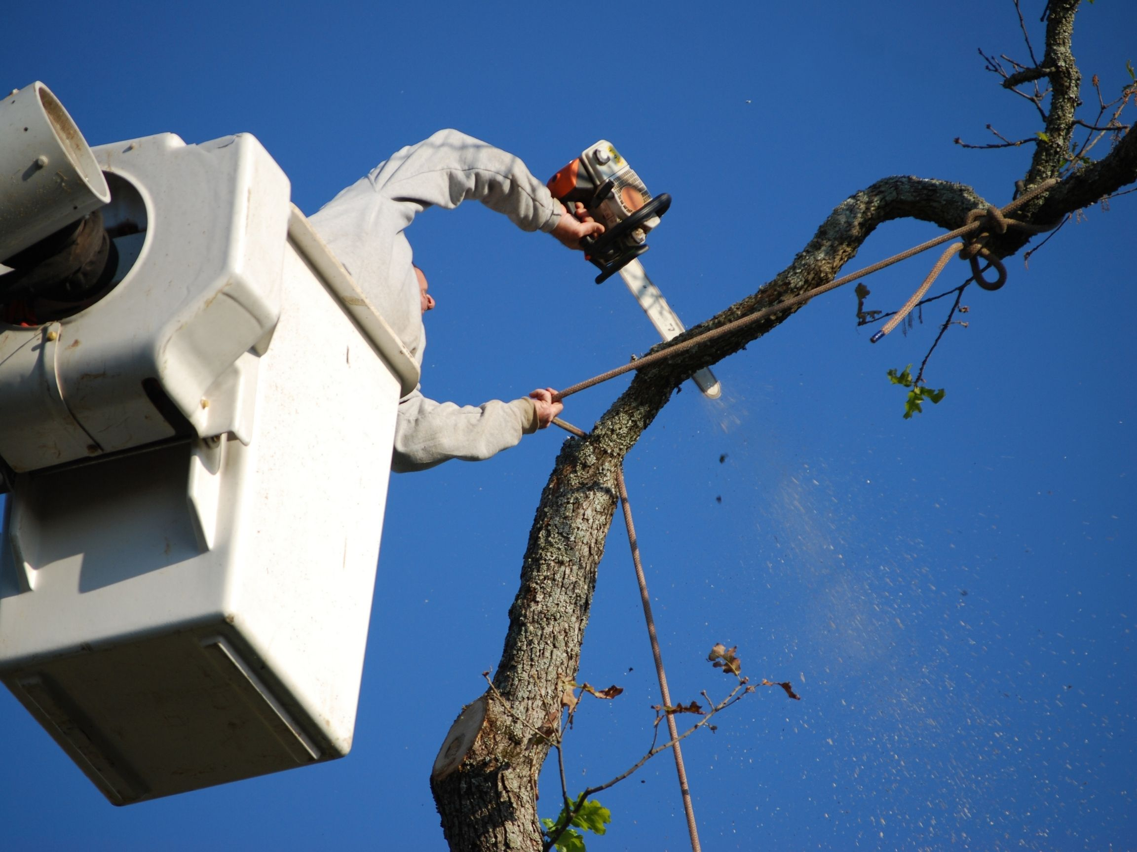 man removing tree limb from a service truck in dartmouth