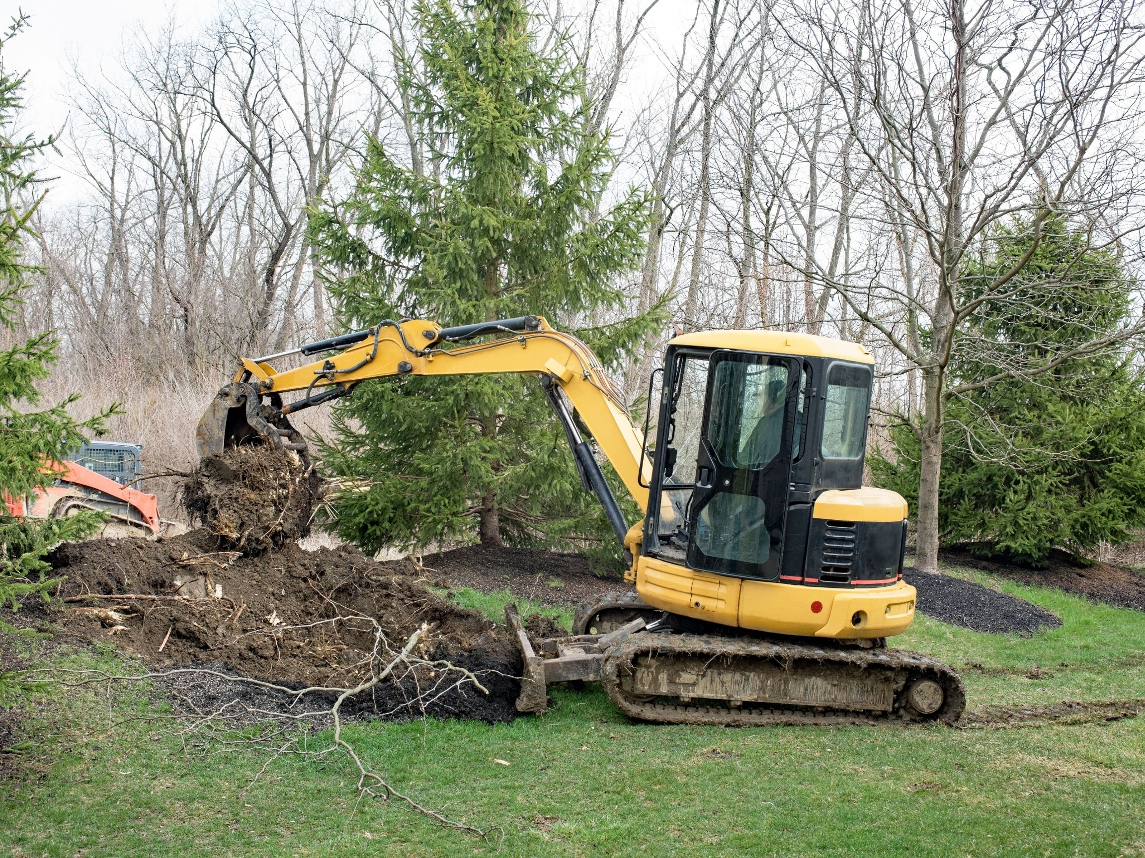 halifax tree removal